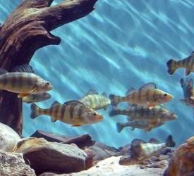 New Brunswick Aquarium and Marine Centre